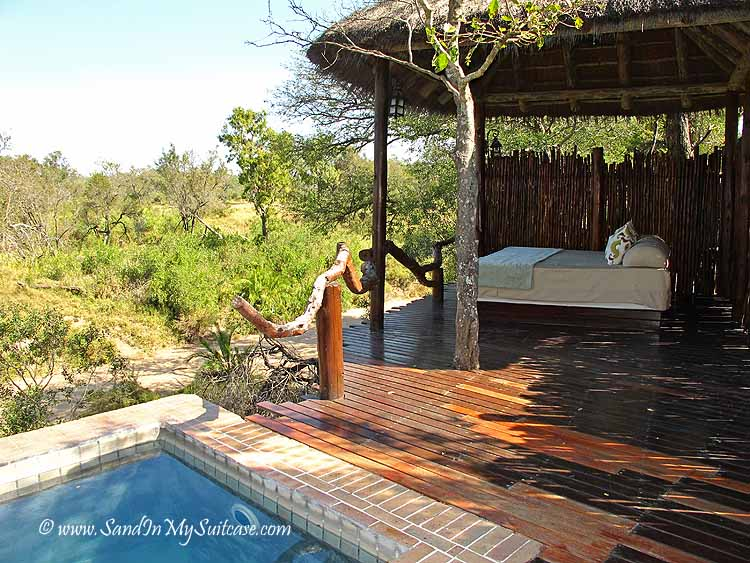 lions on safari - luxury lodges