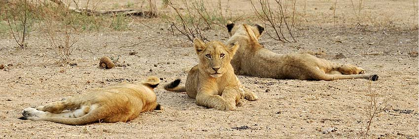 published travel articles - lions