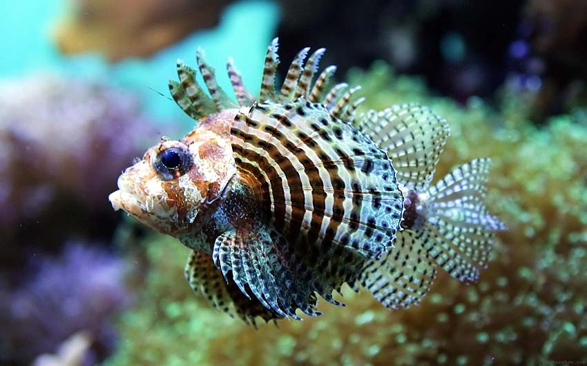 There are lots of amazing tropical fish to see in Cabo Pulmo