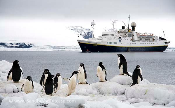 Penguins by a small expedition cruise ship in antarctica for Can you go to antarctica