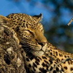 Dreaming of Our African Safari