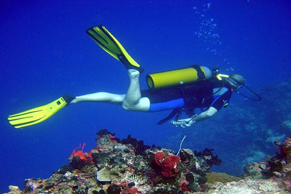 Zanzibar is a relatively new dive destination