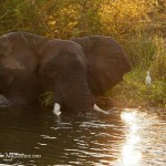 """Discovering the """"real"""" Africa in Zambia"""