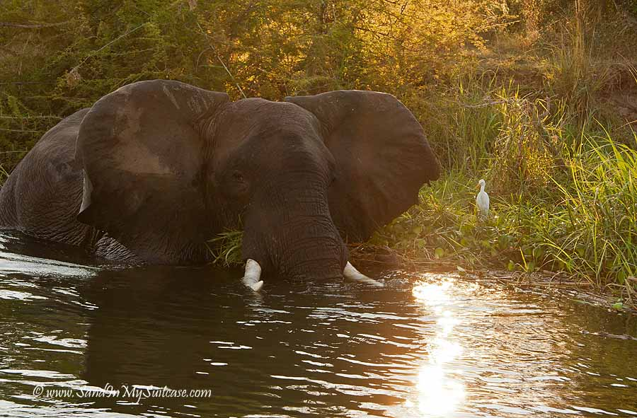 Zambia - elephant