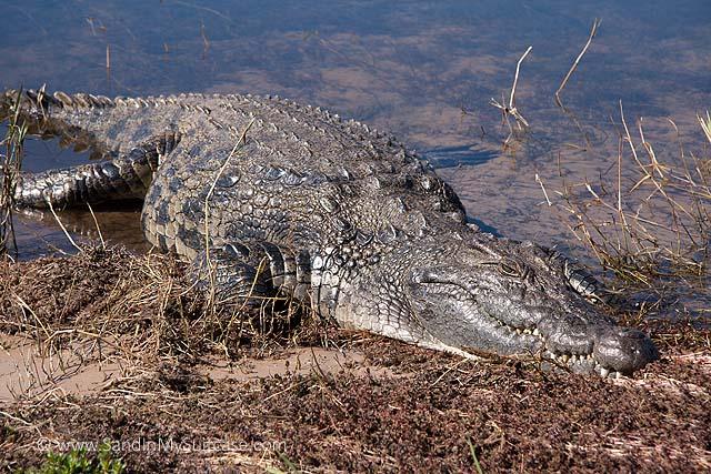 Crocs? Hippos? We're canoeing the Zambezi River! | Sand In ...