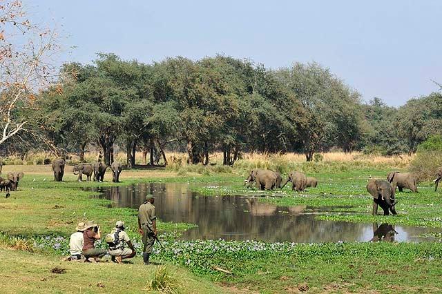 Walking by elephants in the Lower Zambezi - credit Old Mondoro Camp