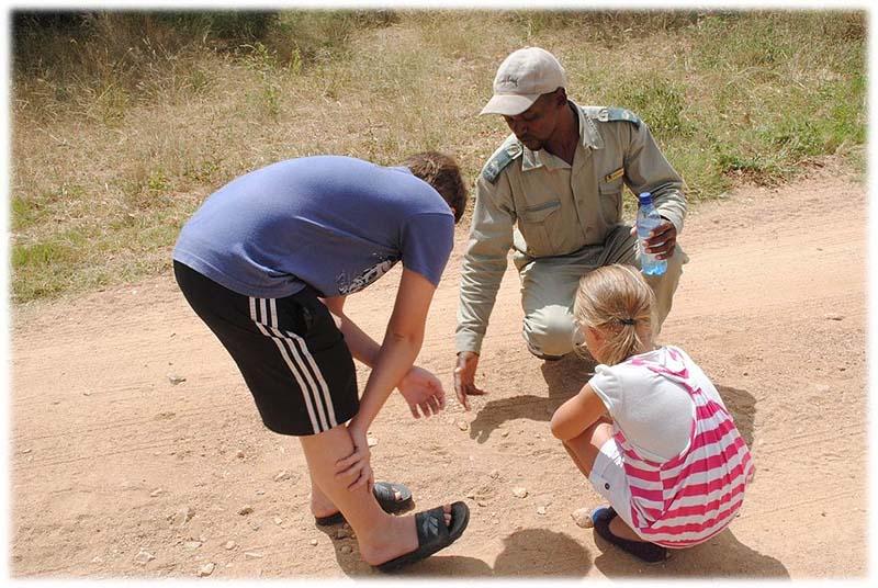 family safaris - thornybush game lodge