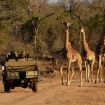 Family safaris at Thornybush Game Lodge