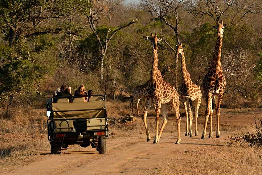 family safaris in Thornybush