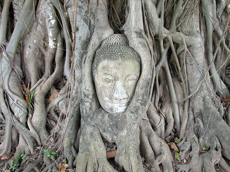 Buddha head overgrown by trees at Ayutthaya