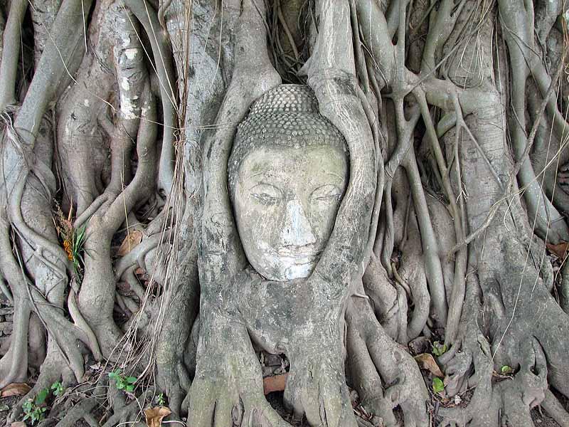 Buddha head overgrown by trees at Ayutthaya