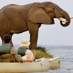 Crocs? Hippos? We're canoeing the Zambezi River!