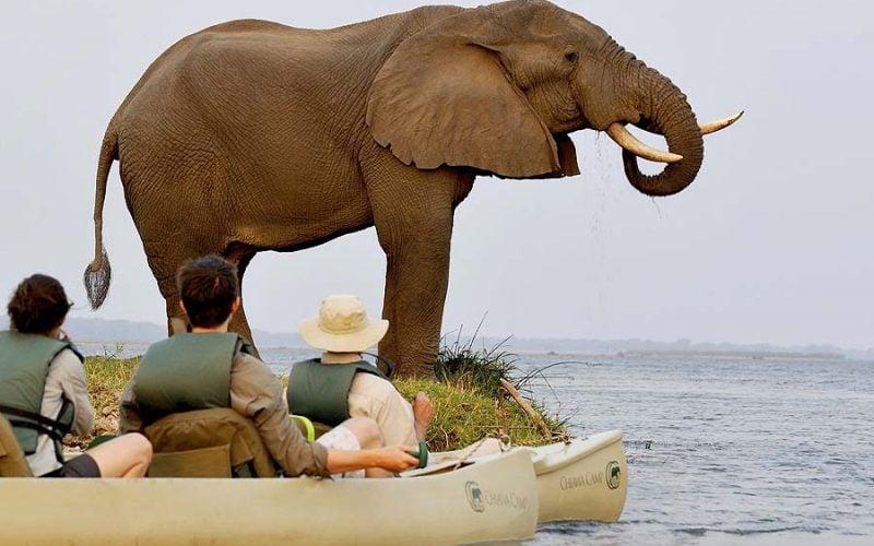 canoeing on the zambezi - elephant at Chiawa Camp