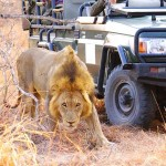 Simbambili Game Lodge Review: Luxury safari stay in South Africa