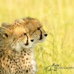 Ode to wild African animals in photos and video