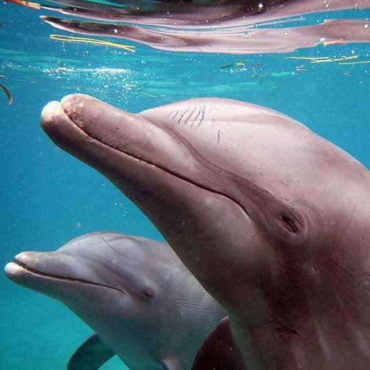 Dolphins - Dolphin Discovery Los Cabos