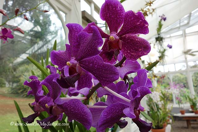 Best Four Seasons Resort Lanai - orchids