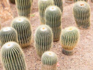 Wirikuta Cactus Garden