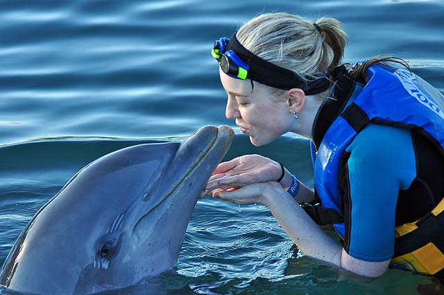Why visit Los Cabos - swim with dolphins