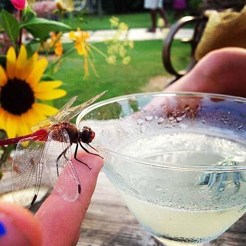 Everyone likes lavender martinis - photo Flora Farms