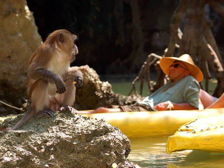 Sea canoeing Phang Nga Bay's hidden lagoons