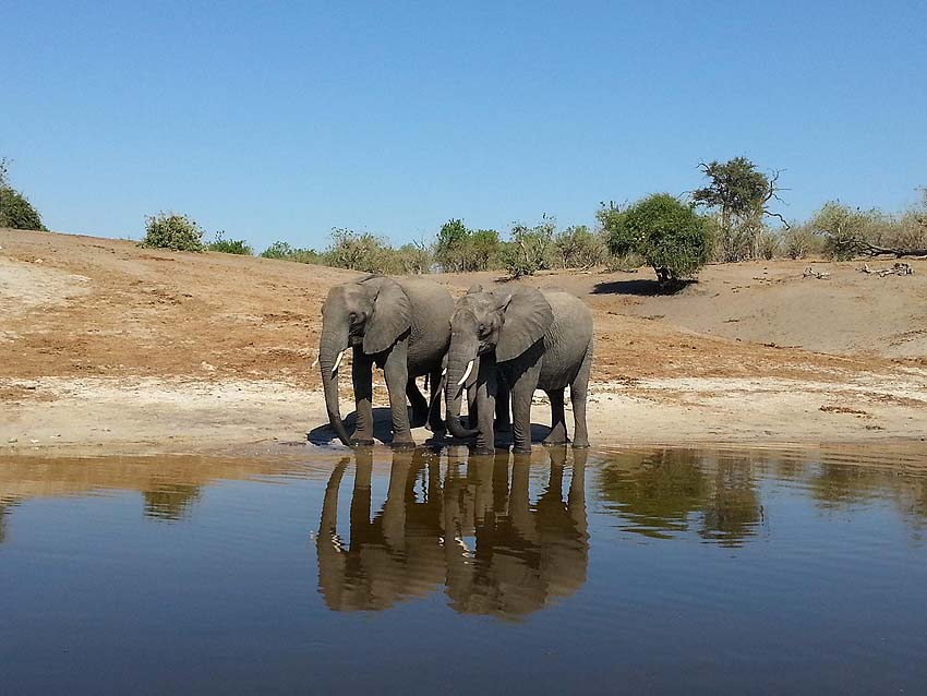 Zambezi Queen - elephants