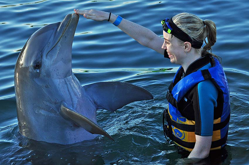 Swim with dolphins - touching a dolphin