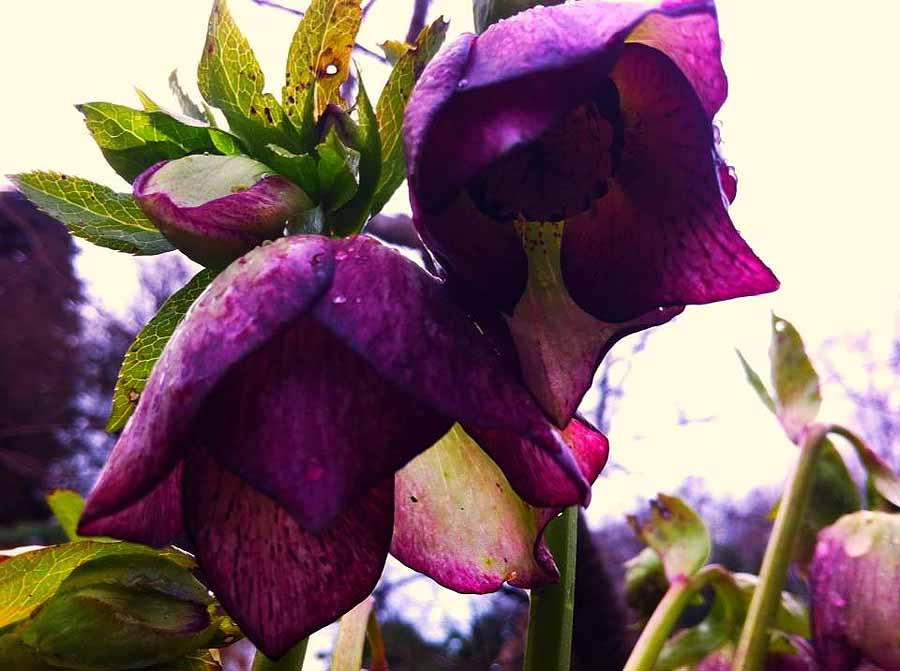 So purple! photo Abkhazi Garden