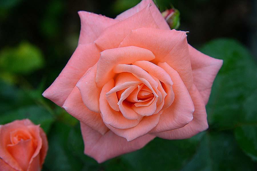 top 5 Victoria gardens - Butchart Gardens