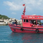 Koh Tao Diving and Snorkeling: Where are the fish?