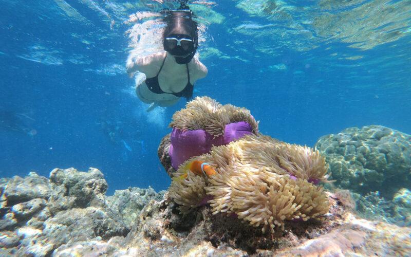 Koh Tao snorkeling