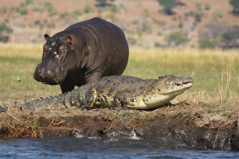 river cruising - African river safari