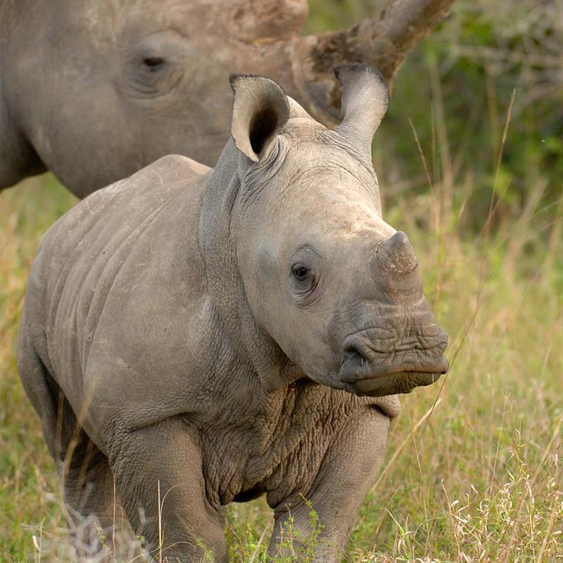 travel philanthropy - saving the rhinos