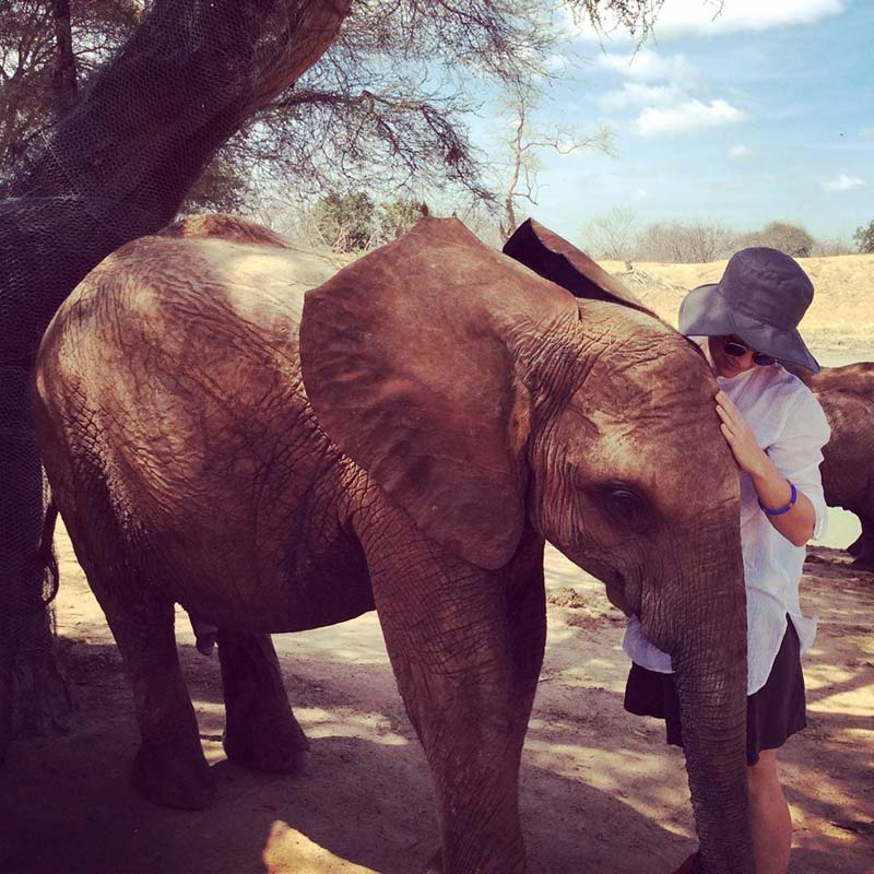 travel philanthropy - orphaned elephant
