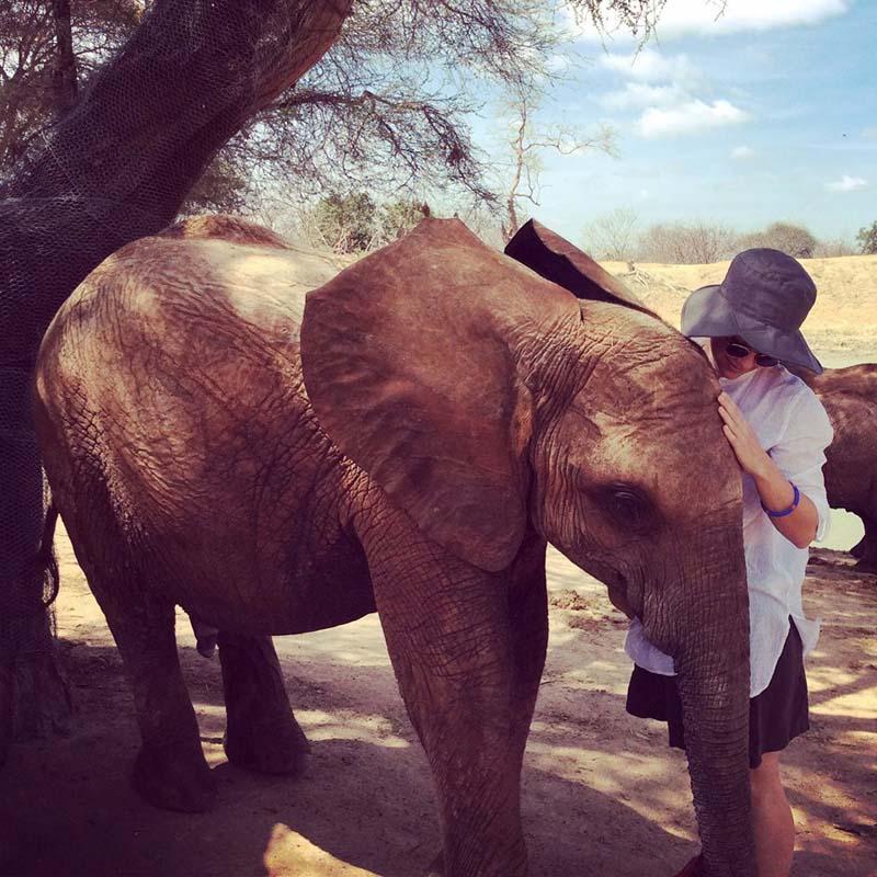 travel philanthropy - orphaned elephant