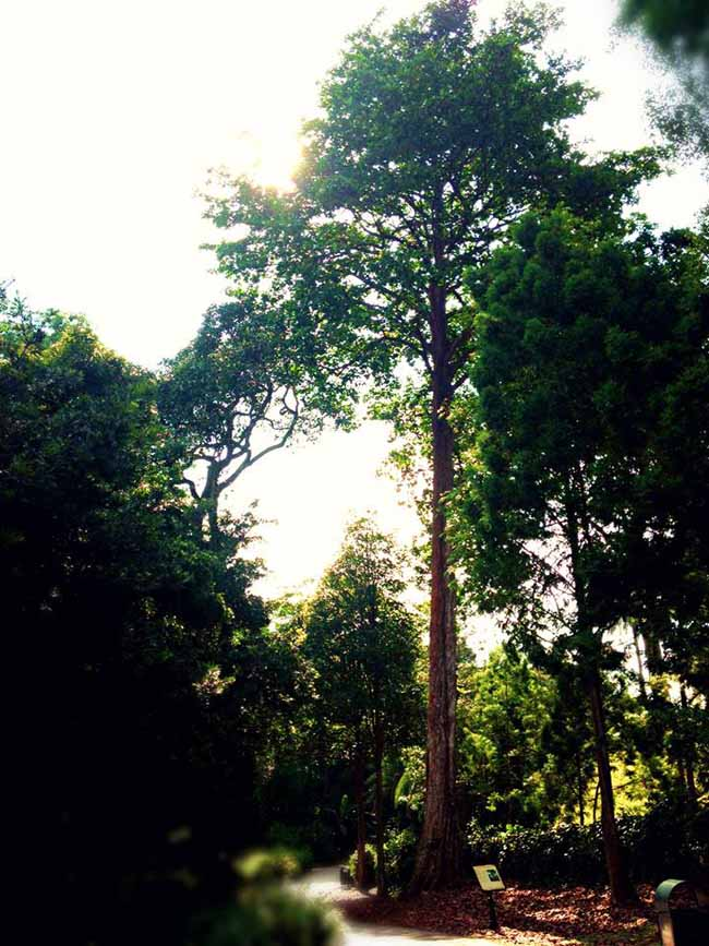 Visiting the Singapore Botanic Gardens