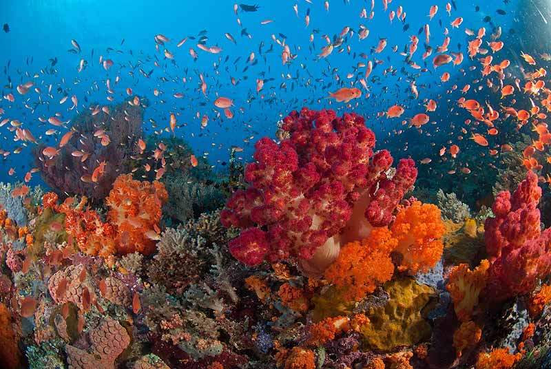 Alila Purnama - colorful corals