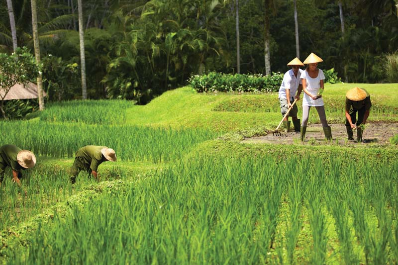 Bali is famous for its beautiful rice fields - photo Four Seasons