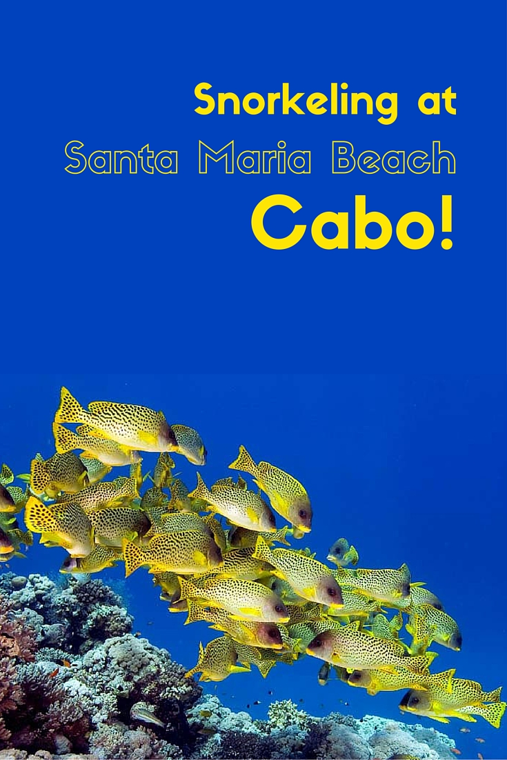 snorkeling-at-santa-maria-beach-cabo