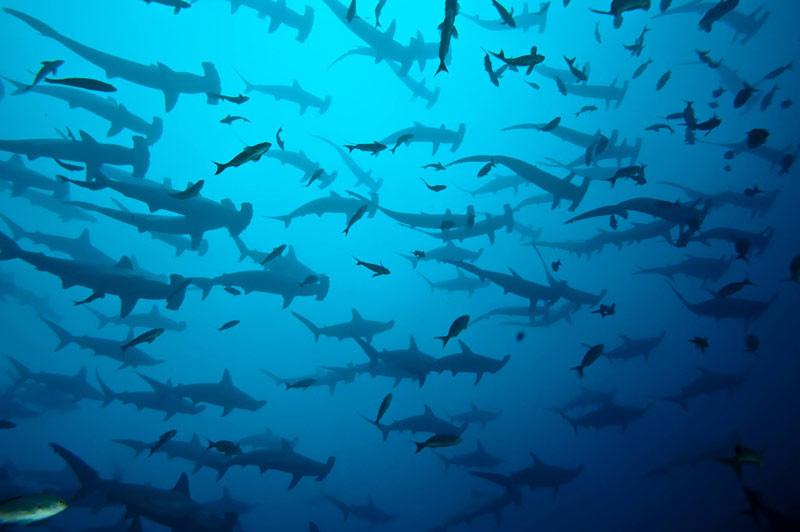 Cabo San Lucas diving