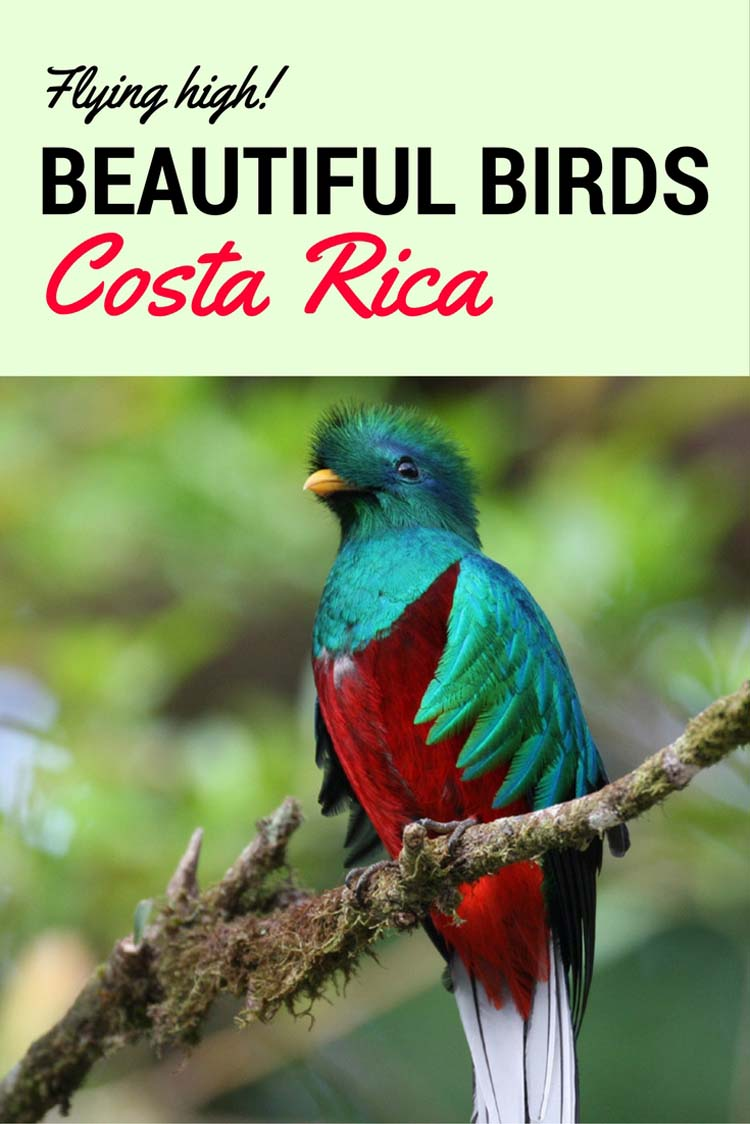 birds of costa rica