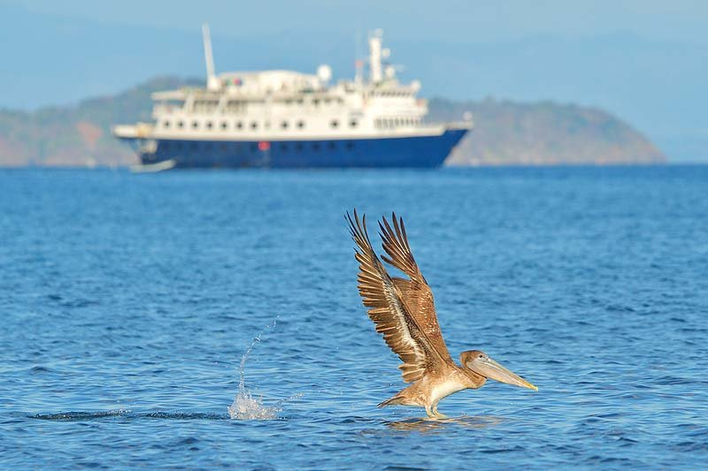 Pelican and ship