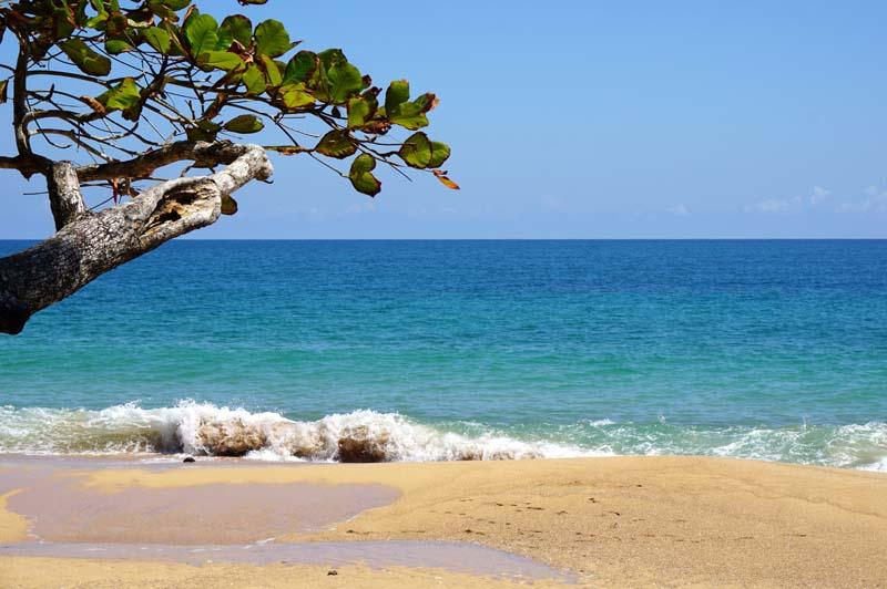 Island Plantation on Bocas