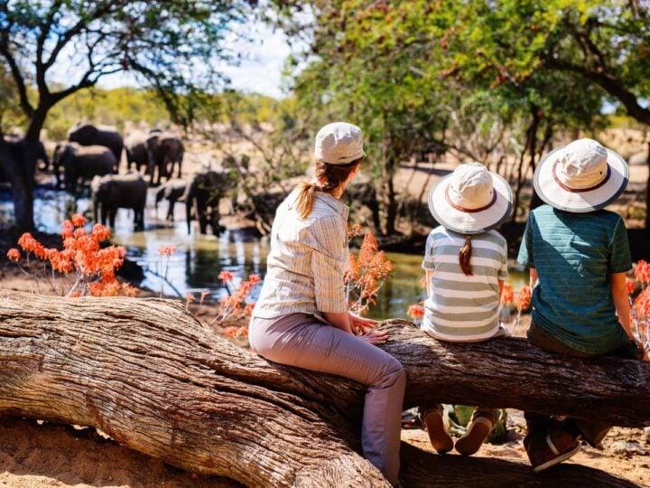 Family safaris at Thornybush