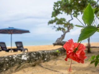 Island Plantation Bocas Del Toro