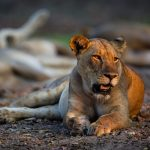 Best walking safaris in Africa (just beware the lions!)