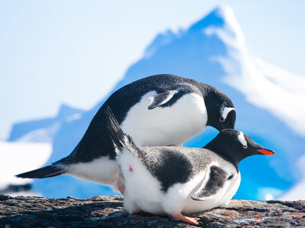 Types of Penguins in Antarctica