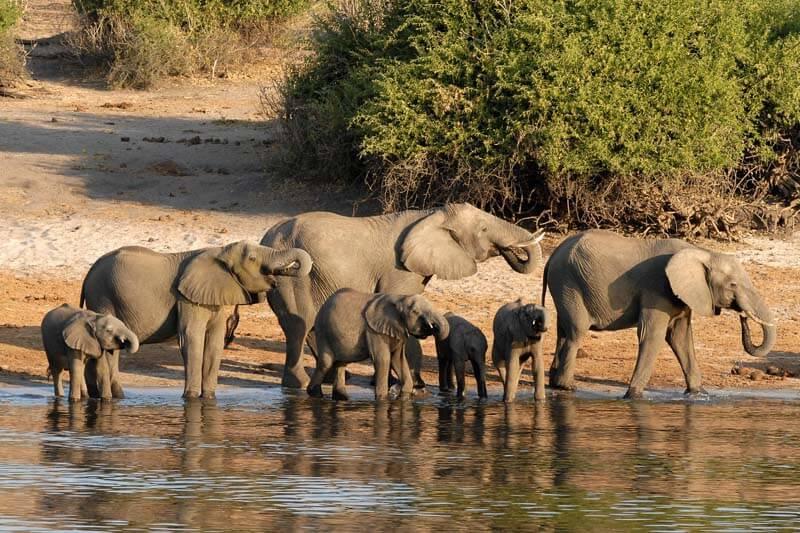 Chobe safari in Chobe National Park