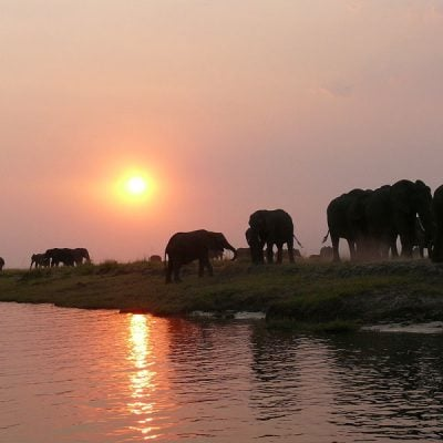 chobe safari - elephants