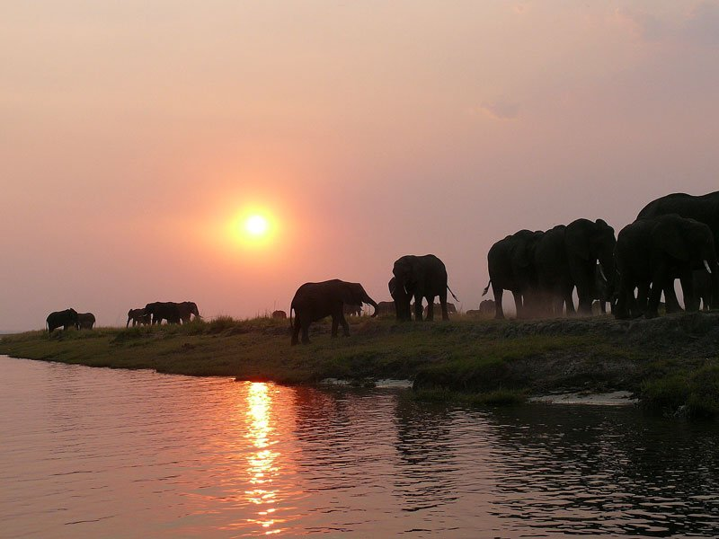 Elephants on a Chobe safari
